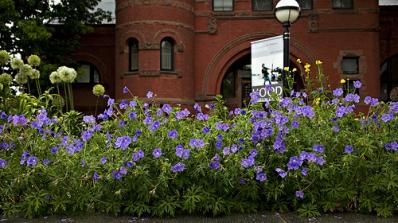 geraniums in front of wilson hall